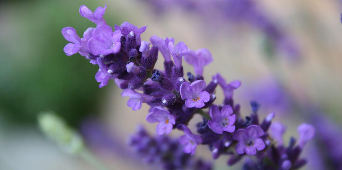 Nieuwe cursus! Rituele aromatherapie bij afscheid